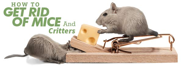 How to Get Rid of Mice and Critters
